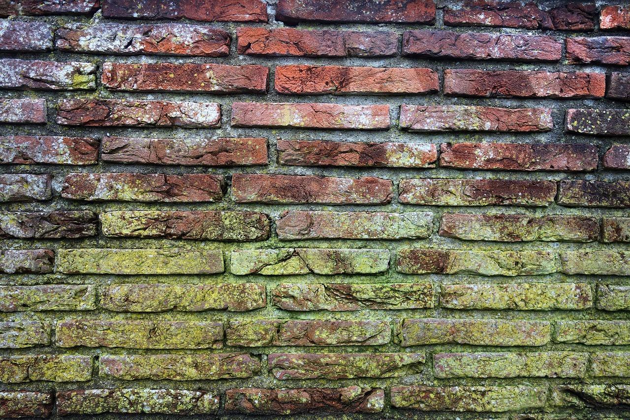 Astuces pour se débarrasser des moisissures au mur